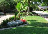 lawn care Plano, fence staining, garden mulching